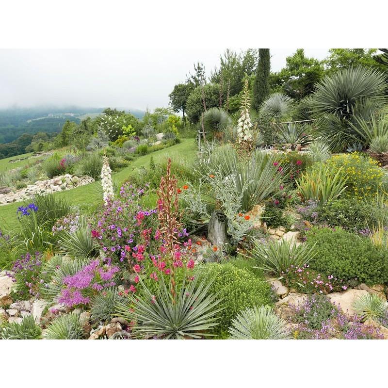 Yucca-Set ''Schwach wachsende Hybriden'', Pflanzensets, Yuccashop -