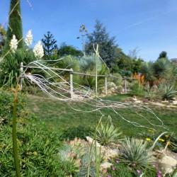 Nolina microcarpa, Bärengras im Yuccashop kaufen -