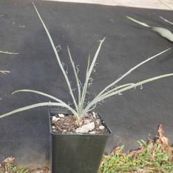 Pflanze im 2L Container