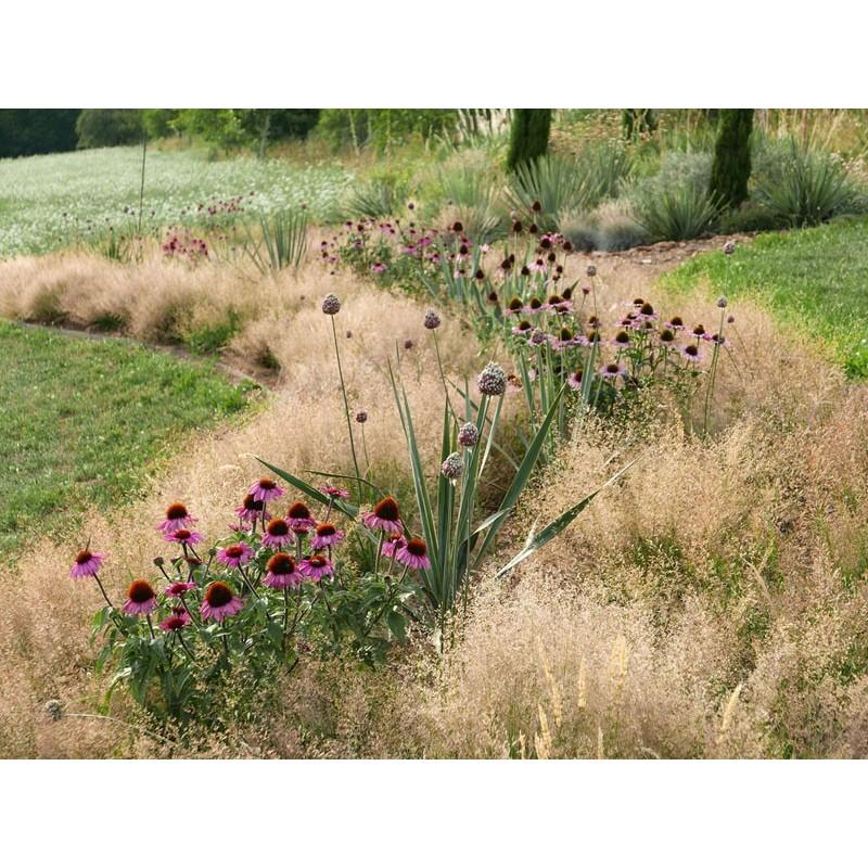 Gräser-Set ''Trockene Steppe'', Pflanzensets, Gräser, Yuccashop -